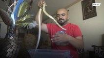 Palestinian man creates very own ZOO in Gaza Strip apartment