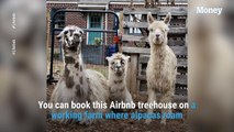You Can Stay in This Treehouse Airbnb Thats Surrounded by Alpacas