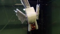 Behold The Electronic Blood Powered Robotic Fish
