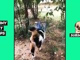 Tik Tok Pets: Funny & Cute #7