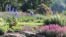 Le jardin Lilaveronica de Thanvillé ouvre ses portes aux visiteurs