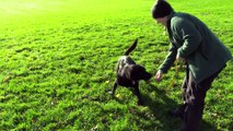 Dogs Trust Leeds Manager Amanda Sands tells how you can get involved
