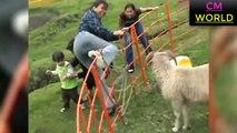 animal attacks 2019 ▶️ Funniest Animal Attacks Compilation ▶️ RAM SHEEP ATTACK