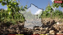 La route des vins  : Bourgogne