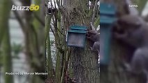 Watch Squirrel Pop Out of Box of Nuts 'Like a Jack in the Box' to Protect Its Food Stash