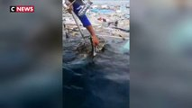 Thaïlande : deux tortues sauvées de déchets plastiques