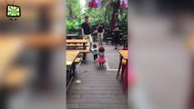 Dogs on Hind Legs Funny Dogs Walking on Hind Legs (Full) [Epic Laughs]