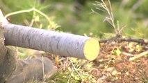 El peligro de incendio se incrementa con la llegada del verano y muchos bosques siguen sucios