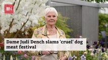 Dame Judi Dench Fights The Dog Meat Festival