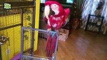 Funny Parrots Dancing  Crazy Parrots Talking (Part 2) [Epic Laughs]