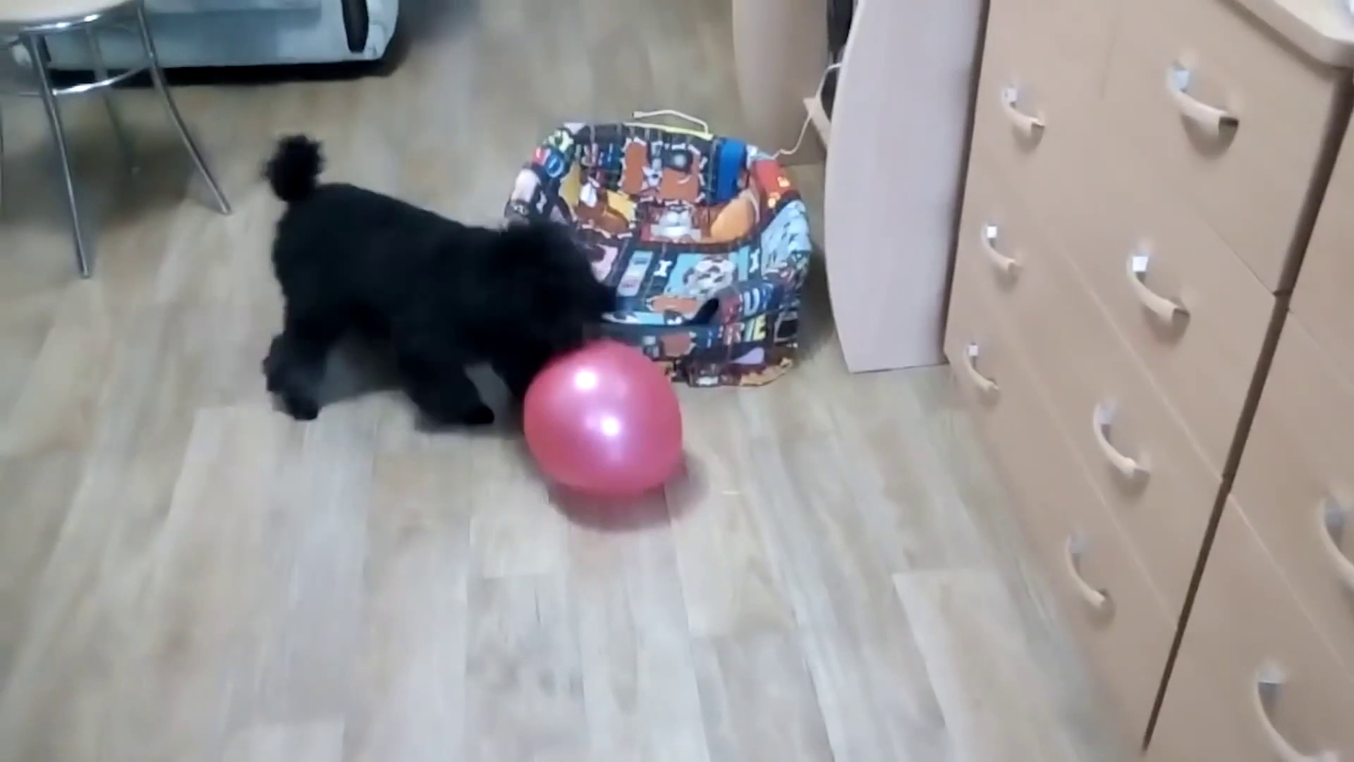 Funny Pets With Balloons  Funny Pets Playing (Part 2) [Epic Laughs]