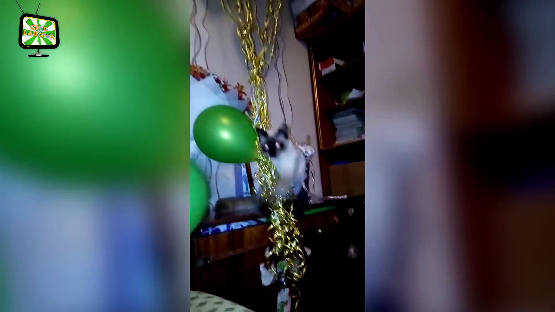 Funny Pets and Balloons  Funny Pets Playing (Full) [Epic Laughs]