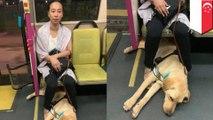 Wanita tunanetra dengan anjing pemandu dilarang penumpang naik bus - Tomo
