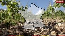 La route des vins : Languedoc