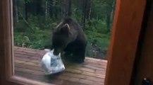 Ce pauvre ours a eu la peur de sa vie