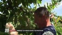 Canicule : les agriculteurs luttent contre la hausse des températures