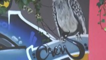 Afrique du sud, UNE NOUVELLE IMAGE DU GRAFFITI