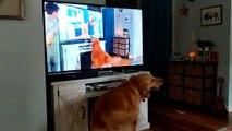 Doggo Barks in Multi Dimension