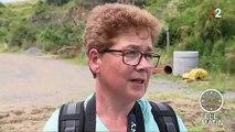Côtes-d'Armor : les algues vertes font leur retour