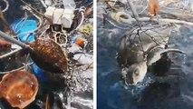Des pêcheurs sauvent deux tortues prisonnières d'un tas de déchets
