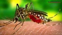 Comment éviter la prolifération du moustique tigre