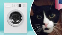 Cat sneaks into washing machine, survives full wash cycle