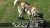Frida, Mexico's famous rescue dog, retires