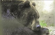 Black bear trapped itself in a closet