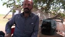 Mardin'de koruma altında olan 'alaca sansar' görüldü