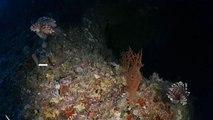 水中ドローンで進む海底調査