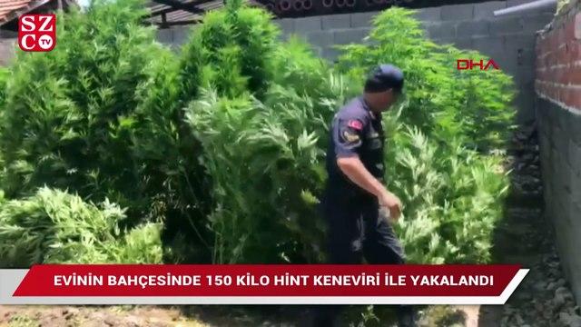 Evinin bahçesinde 150 kilo Hint keneviri ile yakalandı