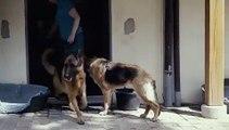 Adoptez le bon geste pour protéger vos animaux des coups de chaleur en cette période de canicule. Regardez !