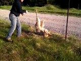 Il tombe sur un loup piégé dans une clôture et le libère