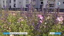 Angers : des arbres pour lutter contre la chaleur en milieu urbain