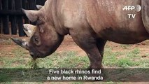 Five rhinos resettled in Rwanda from Czech Zoo