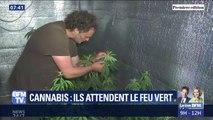 Cannabis thérapeutique: ces malades et agriculteurs espèrent le feu vert du gouvernement