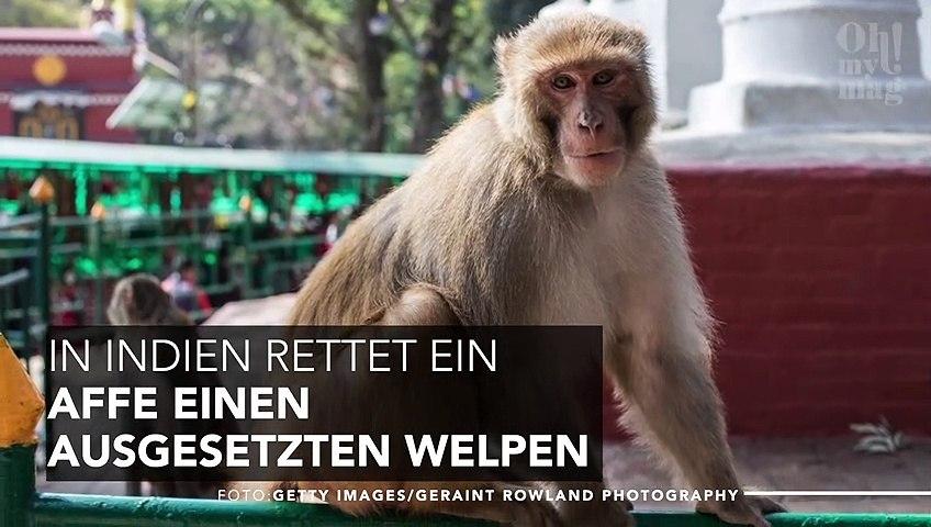 Dieser Affe findet einen ausgesetzten Welpen. Unfassbar, was er mit ihm tut