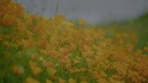 Douceur du vent d'été : Un poème de Jipy Pink