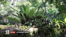 Feuilleton : Guyane, le royaume vert (3/5)