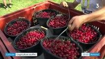Canicule : les agriculteurs s'adaptent pour moins souffrir