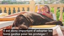 Canicule : 5 gestes à adopter pour protéger son chien