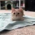 Ce chat va faire quelque chose de trop mignon. Regardez !