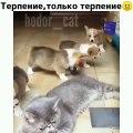 Ces chiots ne veulent pas laisser une chatte dormir en paix. Trop marrant !