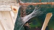 Ce qu'il découvre dans sa boite aux lettres est terrifiant : des centaines de bébés araignées