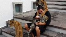 Gros calin entre un  lion, un tigre, une panthère.... et leur dresseur