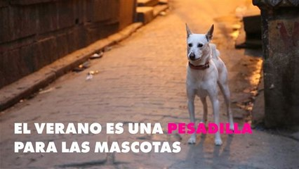 La campaña más importante a favor de los animales
