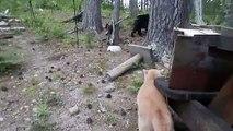 Les chats sont officiellement les créatures les plus courageuses sur toute la planète