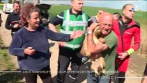 A Dog Named Billy Found Alive After Six Days Trapped Underground