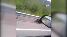 - Yavru Ayı Yol Kenarına Oturarak Otomobilleri İzledi
