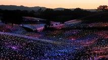 شاهد: آلاف الكرات الزجاجية تضيء حقلاً للنبيذ بالطاقة الشمسية
